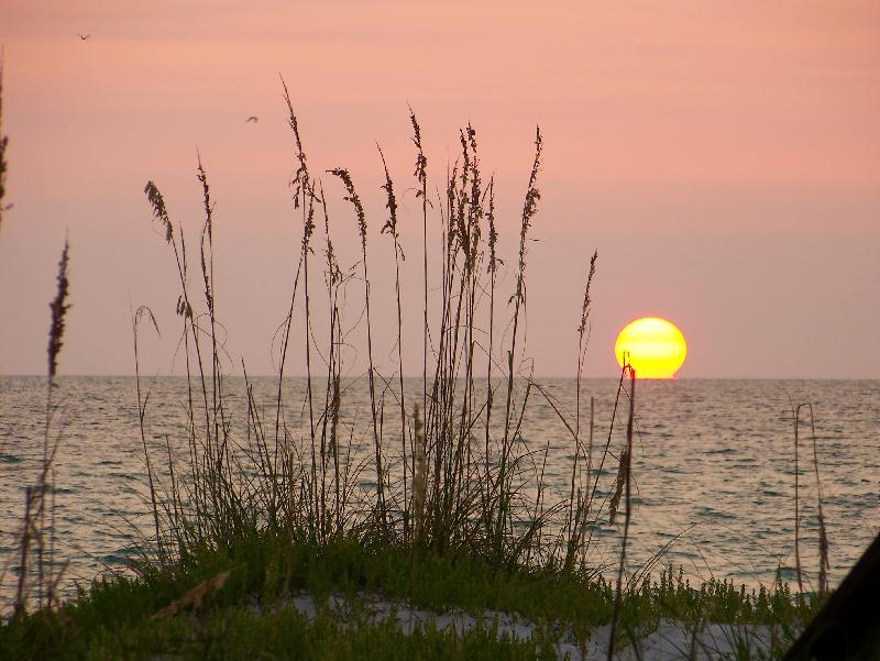 Sea Oats at Sunset on AMI